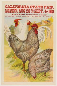 California State Fair, Splendid Poultry Show, 1909