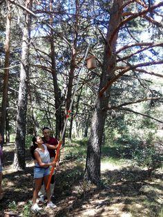Jornada de voluntariado para preparar y colocar cajas nido para aves insectívoras en Valsaín, Segovia