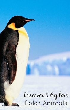Discover and Explore Polar Animals...activities, resources and tips for teaching kids about polar animals