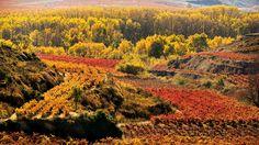 Paisaje multicolor de viñedos, en La Rioja.