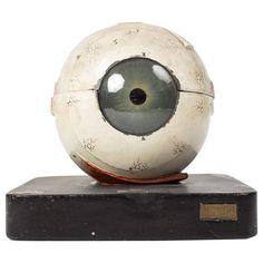 Model of the Human Eye 1