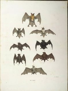 BATS Why They Are Important And How To Get Bats To Make A Home