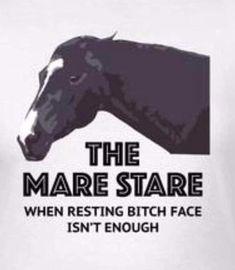 #prettyhorse Funny Horse Memes, Funny Horses, Funny Animals, Horse Humor, Wild Animals, Equestrian Memes, Equestrian Problems, Horse Girl, Horse Love