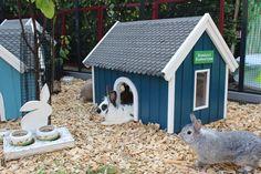 kaninchen häuschen
