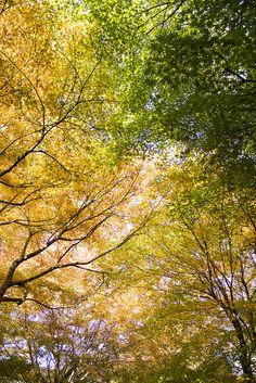 Nature, Japan