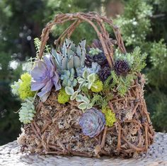 Grapevine Purse Unique grapevine purse. Sturdy grapevine has been hand crafted into this beautiful purse. We then plant it with moss and colorful exotic succulents . This eye-catching mini garden is sure to be a conversation piece. It can be grown in filtered outdoor lighting or bright light indoors. Protect from freezing. Dimentions – 9.5″ T x 9.5″W https://simplysucculents.com/shop/grapevine-