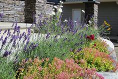 花園    玄関前の花。 我が家 唯一のガーデン ← 季節限定  他は見渡す限り  不毛の地 ← 年がら年中  芝刈り機とかスプリンクラーとか、憧れるな〜