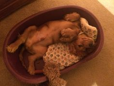 This is how my puppy lies in his basket http://ift.tt/2nhUaLc