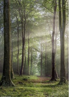 A natural corridor of trees is pictured in Buckholt Wood, Cranham, Gloucestershire, by photographer Rob Wolstenholme #Landscape