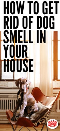 How to Get Rid of Dog Smell in the House: All's Well With No Smell