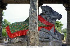 Nandi statue, dodda basappa shiva temple, gadag, Karnataka, india, asia - Stock Image