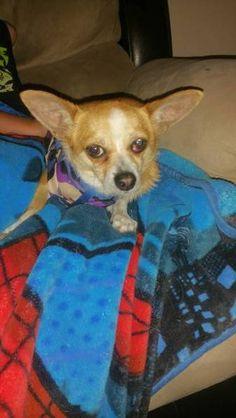 FOUND DOG: 07/04/2017 - Las Vegas, Nevada, NV, United States. Ref#: F32683 - #CritterAlert #FoundPet #FoundDog