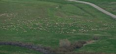 Wind Wolves: Those Tiny Sheep by Wayne Wong on Capture Kern County // These were so small I didn't know I captured them until I happened to spot them in a small corner of the image in the computer!  This would make a great jigsaw puzzle!