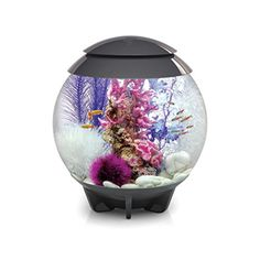 With its hidden waterline, the biOrb HALO is a visually seamless aquarium. The biOrb HALO 30 is the perfect aquarium for anyone new to fish keeping. You can enjoy all the technology of an advanced Betta Aquarium, Aquarium Set, Betta Fish Tank, Aquarium Lighting, Aquarium Design, Fish Tanks, Aquarium Ideas, Aquarium Store, Mini Aquarium
