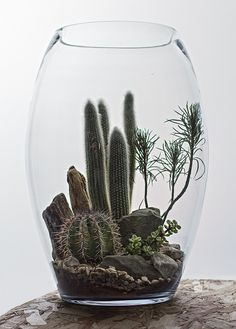 Egg Desert Terrarium