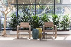 Rhapis palmen geplaats in lage plantenbakken. Eindhoven, Showroom, Outdoor Furniture Sets, Outdoor Decor, Interiordesign, Plants, Projects, Home Decor, Hydroponics