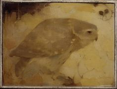 Jan Mankes I Roofvogeltje op tak | Collectie Gelderland I 1911