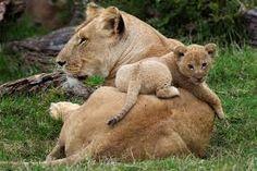 rodičovská láska - StartPage podľa Ixquick Picture Search