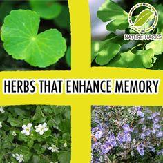 5 Herbs That Enhance Memory- - Gotu Kola, Gingko, Biloba, Bacopin, Blessed Thistle and Rosemary
