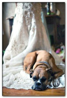 dog wedding dress large dog Dog Wedding Attire, Dog Wedding Dress, Wedding Dresses, White Costumes, Pet Costumes, Dog Tuxedo, Puppy Gifts, Ring Bearer, Dog Harness