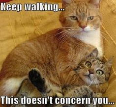 Keeping walking, this doesn't concern you…
