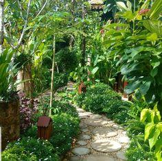 Tropical Gardens, Landscapes, Plants, Paisajes, Scenery, Flora, Plant