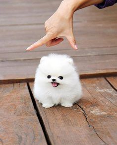 Hehe, so cute im not sure I could handle looking at this everyday!.. Or imagine leaving it..
