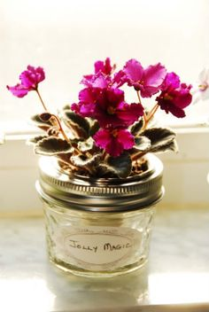 Mini Wick Pot Solution Found! - African Violets Forum - GardenWeb