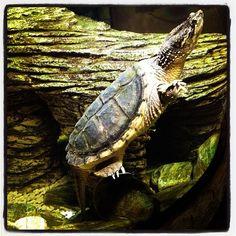 Schildkröte Sea Life München