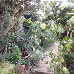Create a breathtaking and exotic tropical plant filled garden that will survive the UK climate. Tropical Plants Uk, Small Tropical Gardens, Tropical Landscaping, Exotic Plants, Garden Border Plants, Garden Borders, Planting, Gardening, Jungle Gardens