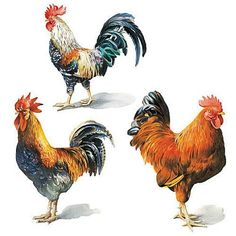 Wallies 12205 Painted Roosters Wallpaper Cutout by Wallies. $7.27. From the Manufacturer                Wallies Painted Roosters Wallpaper Cutouts are prepasted, vinyl coated cutouts that can decorate walls, glass, wood, paper and more. Just wet the back and put them up. They are easy to remove and won't harm walls. Each package is value packed with 25 individual cutouts in 3 styles 3 inches by 4-1/2 inches to 4 inches by 4-1/2 inches.  The package measures 8-1/4 inches ...