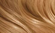Hair Color Chart: Beeline Honey