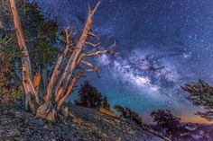 My latest blog post.  Please share!  Behind the Image:  The Milky Way Galaxy and a Brisltecone Pine