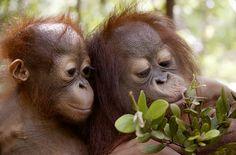 Topic - The rainforest - Rainforest Rescue