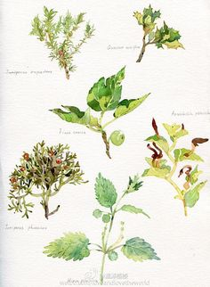 温泽WARMMARSH的照片 - 微相册 Watercolor Plants, World, Art, Art Background, Kunst, The World, Art Education, Earth