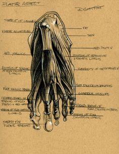 Foot Anatomy 3  by Brett Golliff