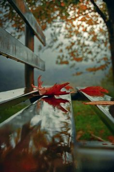 Fall Pictures by Jessie Autumn Photography, Creative Photography, Amazing Photography, Art Photography, Halloween Photography, Autumn Aesthetic, Fall Pictures, Autumn Leaves, Red Leaves