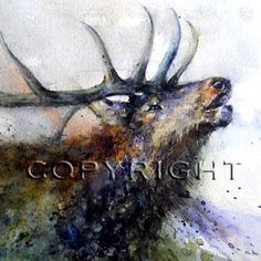 BULL ELK Large Watercolor Print by Dean Crouser by DeanCrouserArt,   A great gift for John or Tom