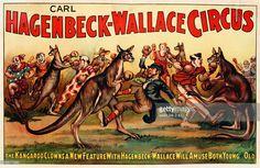 Carl Hagenbeck-Wallace Circus Poster Get premium, high resolution news photos at Getty Images Kangaroo Drawing, Circus Poster, Poster Pictures, Animal Drawings, Vintage Photos, Bing Images, Ink, Kangaroos, Animals