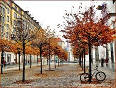 Autumn in Dresden