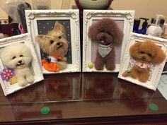 Needle wool felting puppy portrait on picture by KathycCollection Felted Wool Crafts, Wool Felting, Felt Crafts, Needle Felting, Plush Animals, Felt Animals, Dog Lover Gifts, Dog Gifts, Diy Finger Knitting