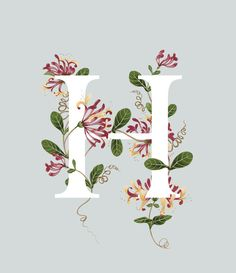 Charlotte Day – Hand-painted Illustration - An A–Z of Edible Flowers