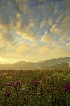 4 Reasons to Vacation in the Smoky Mountains this Season - See more at: http://www.stonybrooklodging.com/blog/#sthash.gi9rA8ET.dpuf