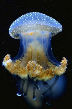 jellyfish by bevyC