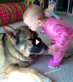 Awww so cute!🐶😂👍 Awww so cute!🐶😂👍 Awww so cute!🐶😂👍 Awww so cute!🐶😂👍 Awww so cute!🐶😂👍 Awww so cute! Funny Cute Cats, Funny Cats And Dogs, Cute Funny Animals, Pet Cats, Cute Baby Dogs, Funny Babies, Cute Puppies, Animals And Pets, Baby Animals