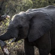 Tracking Instincts | krazywithtravel African Wild. Sabi Sand. Kruger National Park. Elephant Summit Lake, Working Blue, Spring Lake, Kruger National Park, Back To Work, African Safari, Narnia, Blues, Wildlife