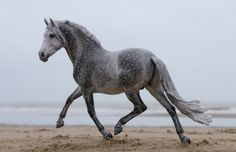 Josine Vingerling...IT'S NOT A REAL HORSE??? HOW IS THIS POSSIBLE? Truly amazing work.