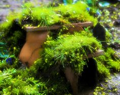 Fairy House + moss = perfection!