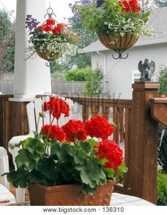 Geraniums - i do like the hanging planter idea too. Just no purple. How will I make this work with my stained glass window though?