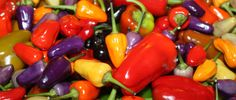Pepper Mania – How To Use All Of Those Peppers From Your Garden - With Recipes and More!